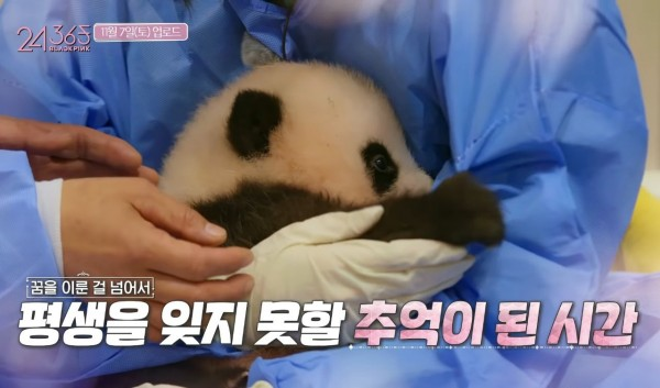 Chinese Netizens Slam BLACKPINK For Interacting With Pandas