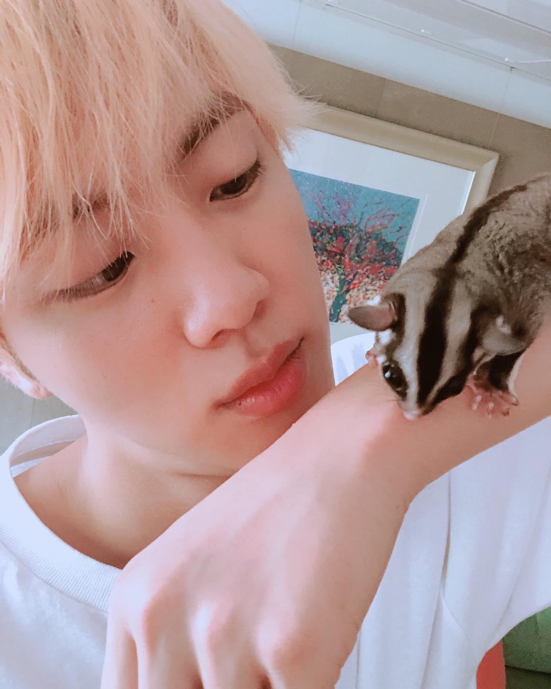 BTS Jin fans adopt 'Jack', a wolf commemorating Jin's 10,500th birthday