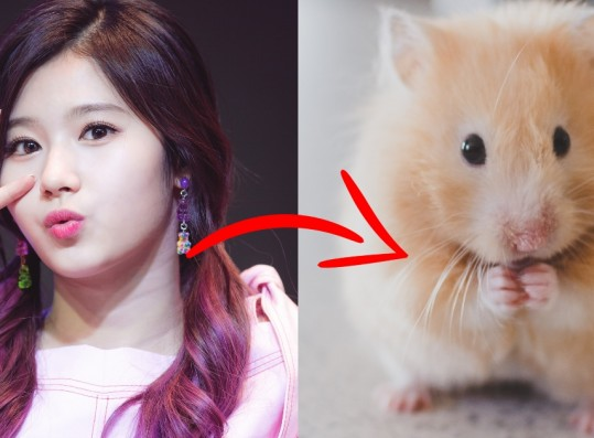 These 5 Popular K-Pop Idols are Known for Their Hamster-like Visuals